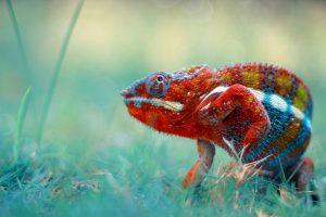 TheMerkle_Robo-reptiles