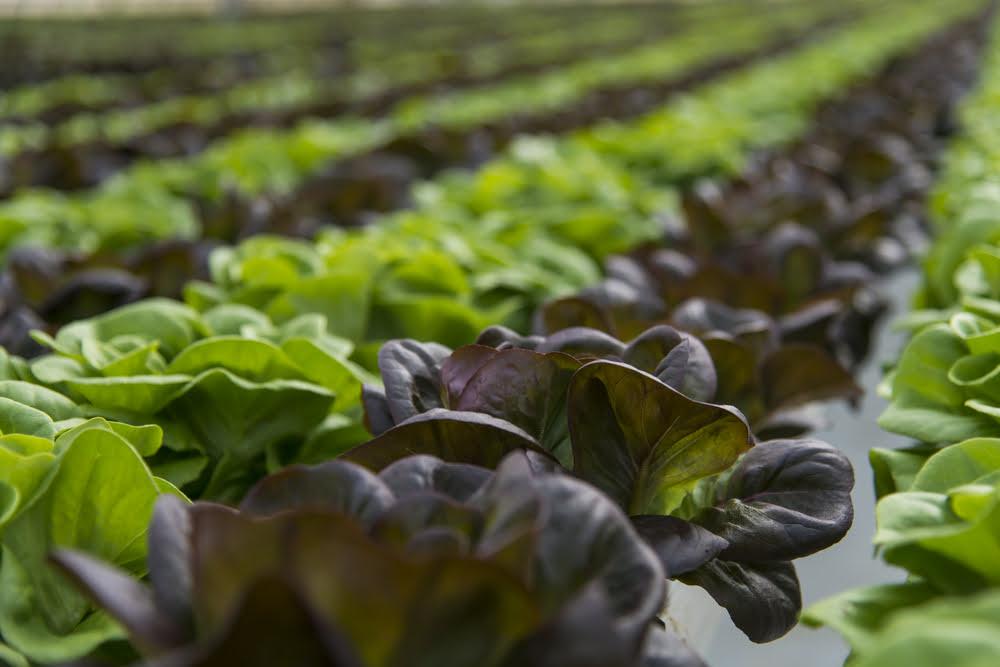 TheMerkle Robots Farming Crops